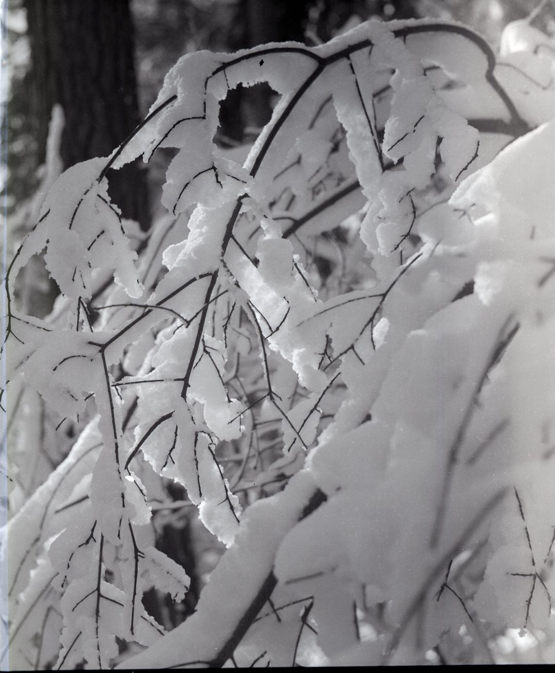 #006 Film per day – Snow Branches, Ramsau am Dachstein