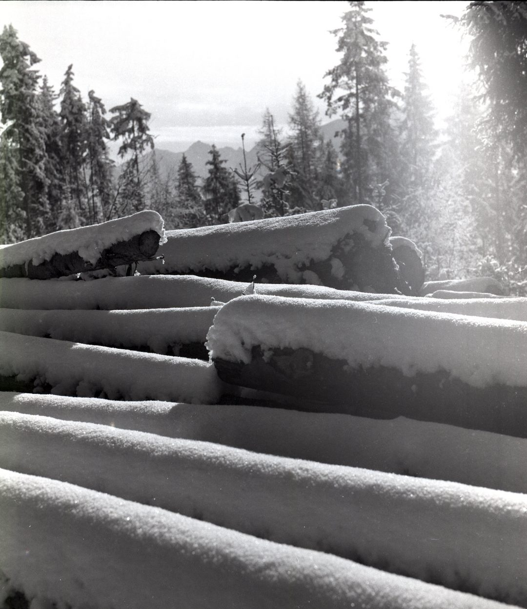 #006 Snow Logs, Ramsau am Dachstein