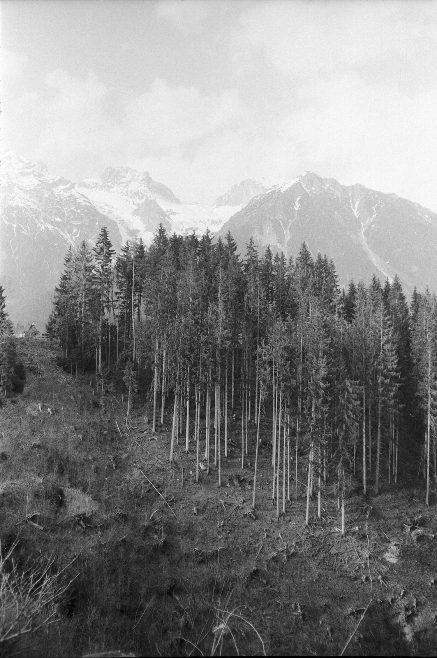 #097 Forest and Mountains, Ramsau am Dachstein