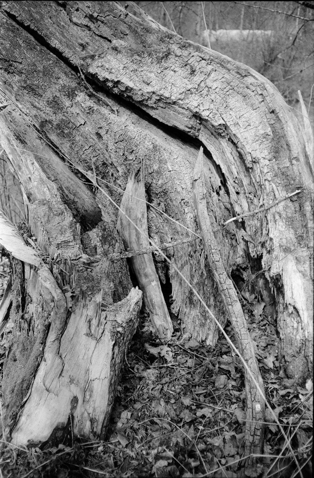#098 Tree Detail I, Weissenbach im Ennstal