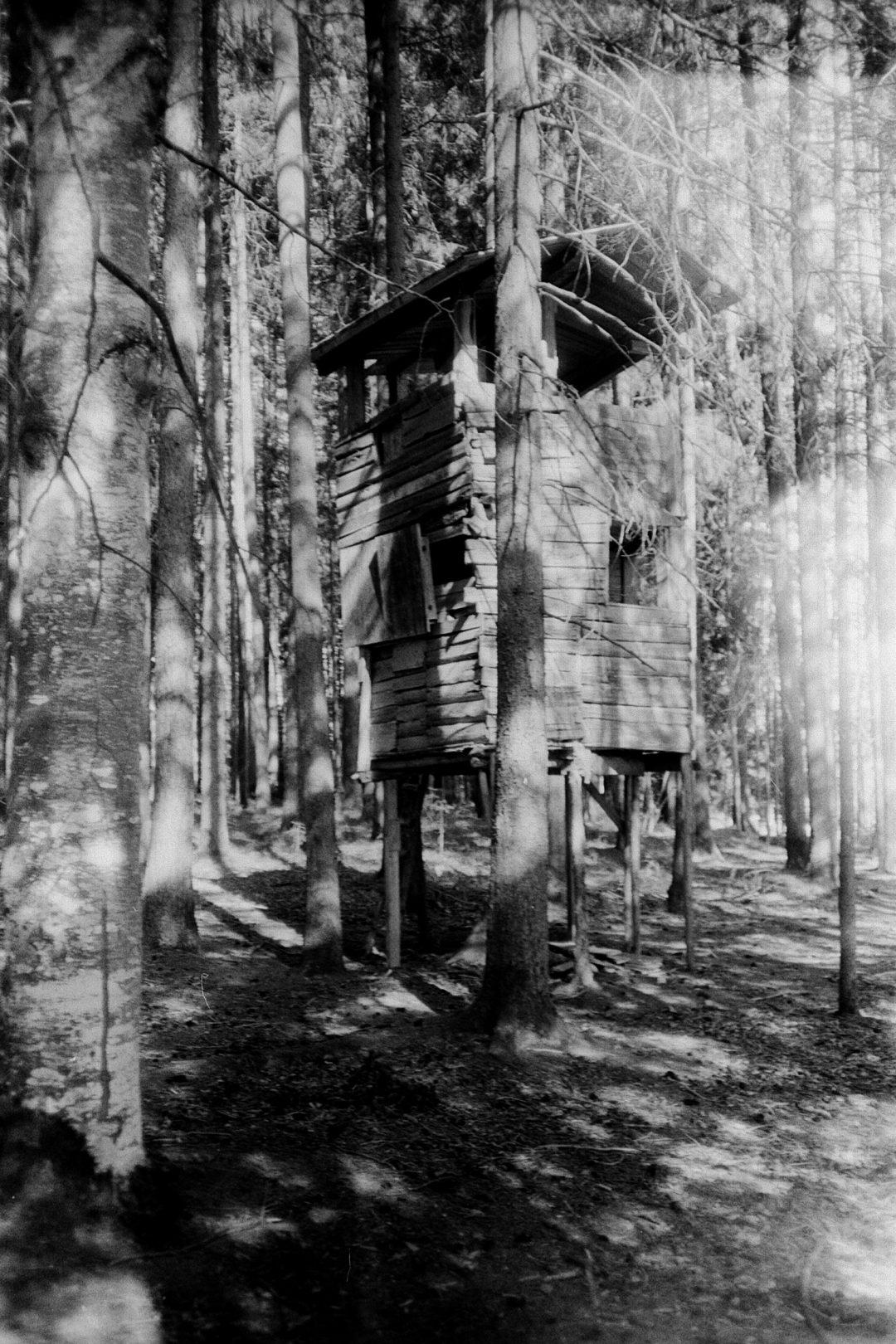 #127 Tree house, Birnberg