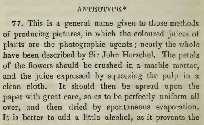Bingham, Robert J., ca. 1800-1870Anthotype - Bingham, Robert J., ca. 1800-1870