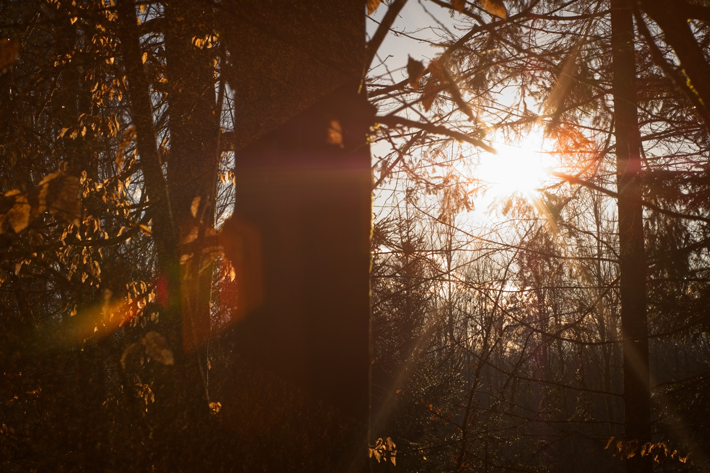 Lens flare with Yashica 50mm on Fujifilm X-E3