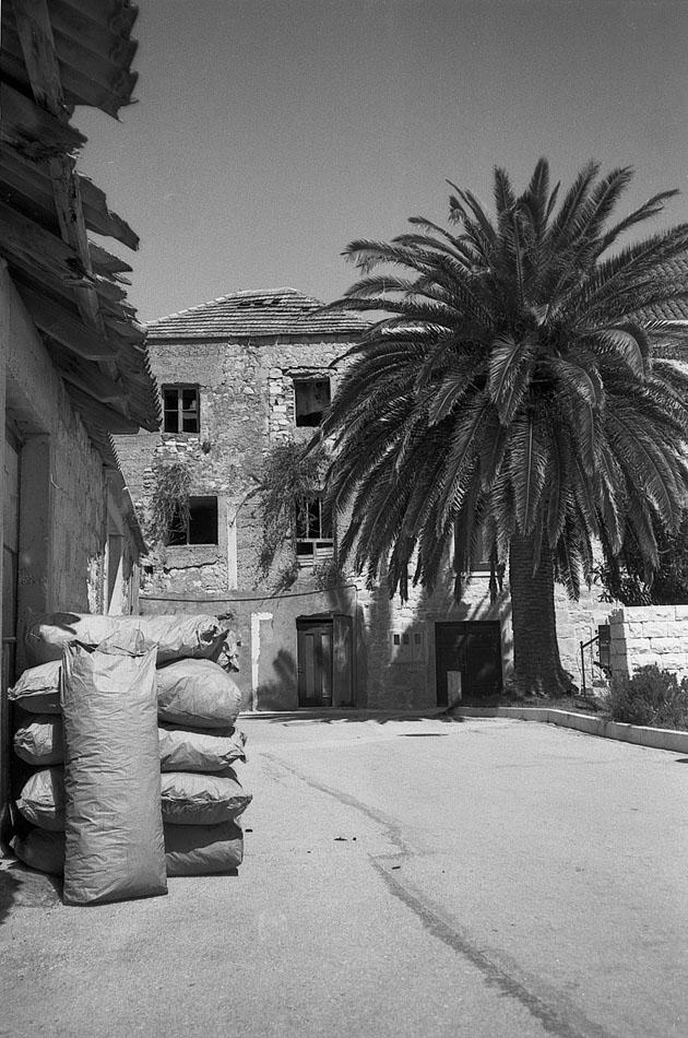 Paper-sacks-and-palm-Sućuraj-Hvar