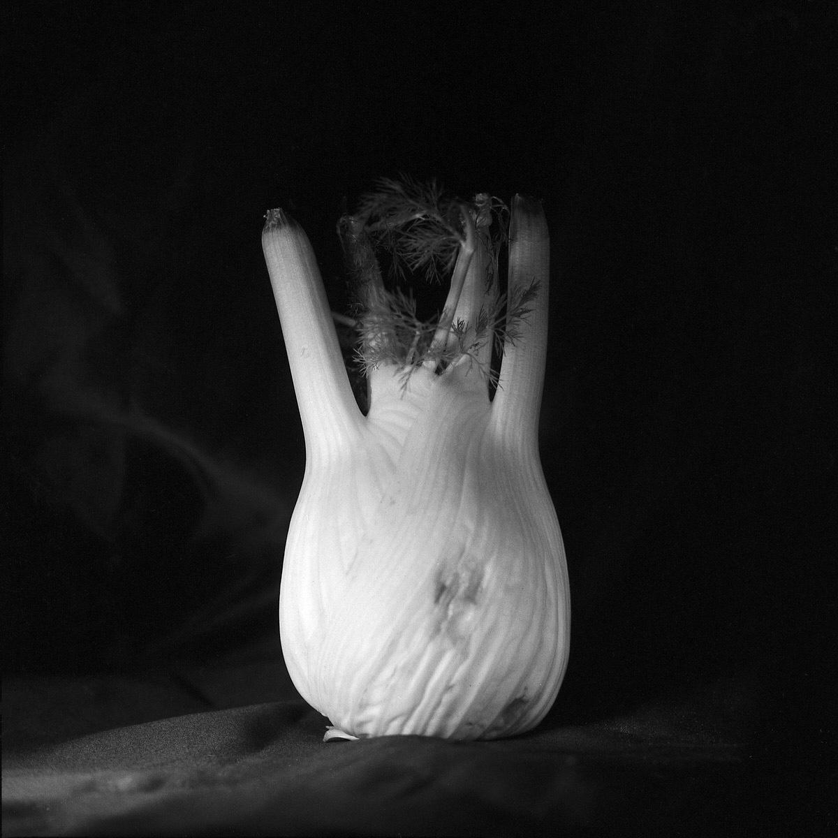 Fennel - Still Life Photography | Yashica MAT124 with Fomapan