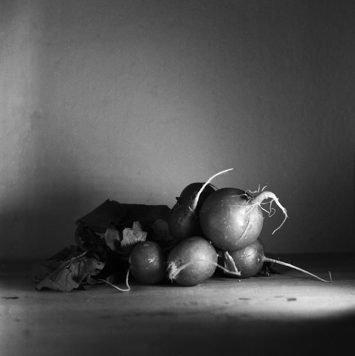 Radish - Still Life Photography | Yashica MAT124 with Fomapan