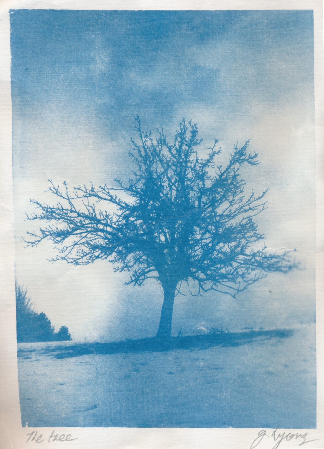 The Tree - Cyanotype print from film