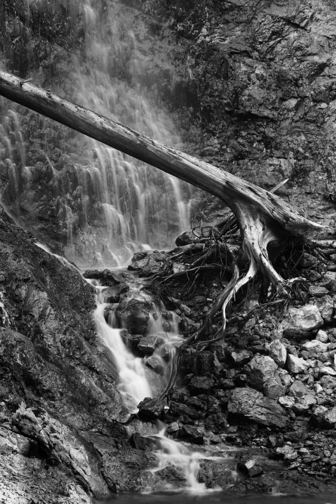 Tiefenbachklamm fall and tree
