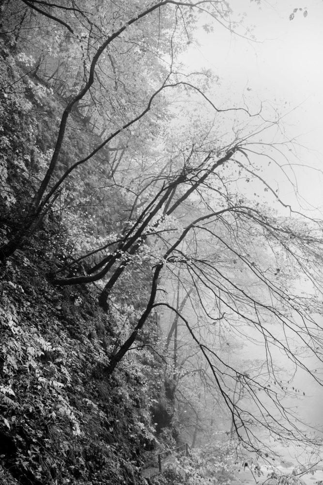 Vintgar Gorge Trees