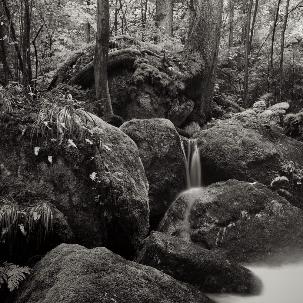 Ysperkalmm - Roots and Rocks