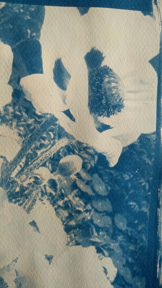 Closeup detail of the Cyanotype