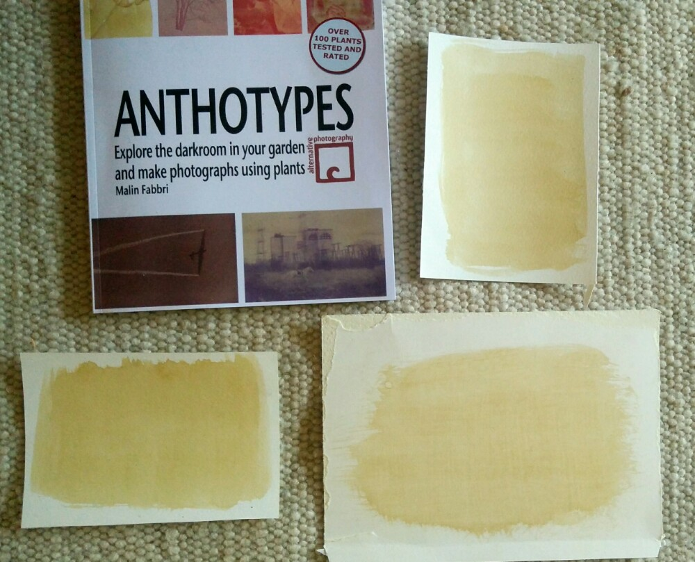 Dried Papers with Dandelion Emulsion for Anthotype